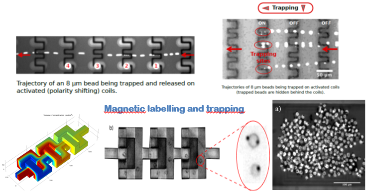 On-chip magnetic trapping